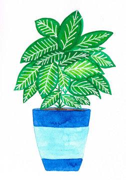 Watercolor handmade colorful dieffenbachia in a blue pot