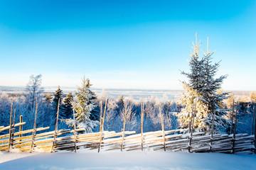 Vinterlandskap i Dalarna Sverige med snötäkta grantoppar