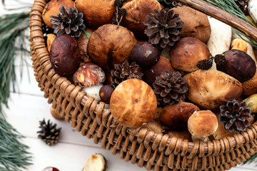 Boletus mushrooms in basket. Rustic style, natural day light. Close up. Autumn background.