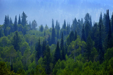 Forest of Pine Trees in Mountains Landscape Lush Green Growth Foliage Wall mural