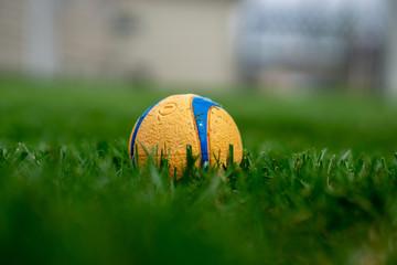 Orange dog toy ball in grass in summer