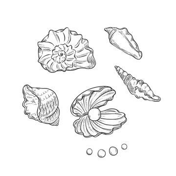 Vector set sea shells and pearls different shapes. Clamshells monochrome black outline sketch illustration isolated on white background for design of tourist cards logos on marine theme.