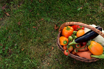 Set of vegetables in a wicker basket. Freshly picked harvest in the green grass. Copy space