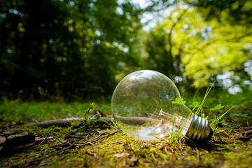Edison Globe Lightbulb Nature