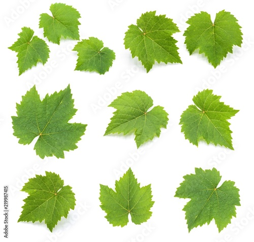 Fototapete collection of green grape leaves isolated on white background