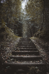 Steps leading into the woods