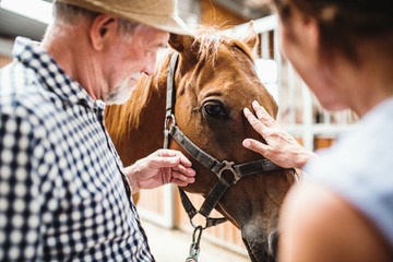 A close-up of senior couple petting a horse.