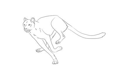 cheetah running, drawing lines, vector