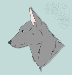 portrait of a gray wolf on a background