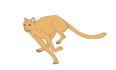 yellow cheetah, running, vector