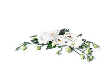 Beautiful Haustoma flowers on a white background with green petals