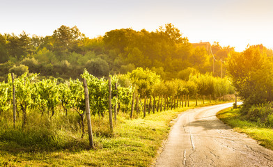 Vineyard by the road, country landscape - agriculture