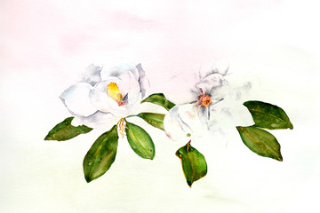 watercolor background textured ombre wash with magnolia flowers