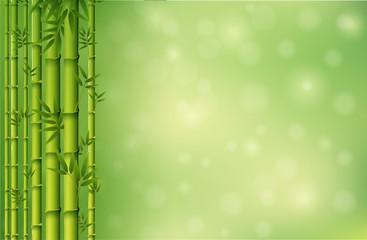 A green bamboo wallpaper