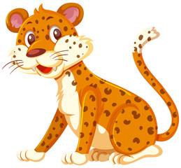A leopard on white background