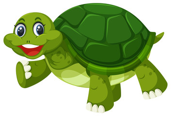 A green turtle on white background