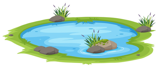 A natural pond on white background