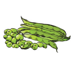 isolated green color hand drawn beans and seeds
