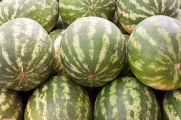 lots of green watermellons backround