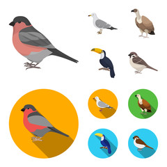 Gull, toucan and other species. Birds set collection icons in cartoon,flat style vector symbol stock illustration web.