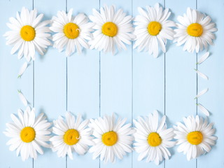 Flowers composition. Pattern made of daisy. Spring and summer chamomile flowers on a wooden light blue background. Flat lay, top view, copy space