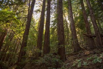 Woodside California, Wunderlich Redwoods
