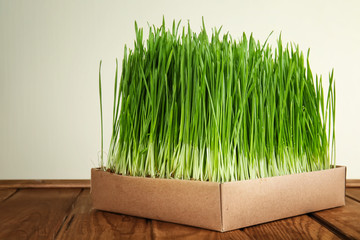 Box with sprouted wheat grass on table against white background