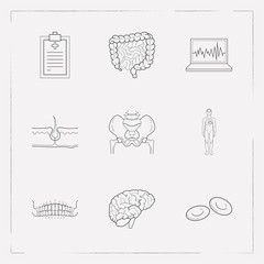 Set of medicine icons line style symbols with pelvis, brain, intestine and other icons for your web mobile app logo design.