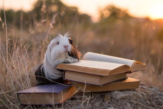 guinea pig book