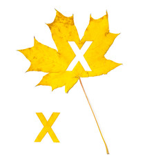 Autumn alphabet. Letter X is cut from  yellow maple leaf