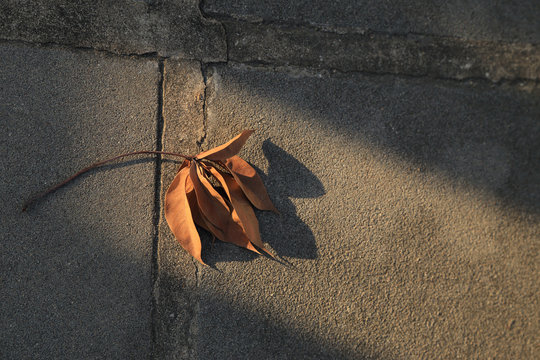 Dried leaf fall on ground with sunlight beam, abstract autumn background.