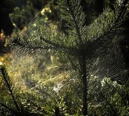 Spider webs - first sign of autumn