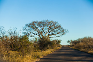 A long tar roadie the Kruger park, South Africa