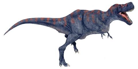 タルボサウルス・バタール。白亜紀後期の肉食恐竜。ティラノサウルス科の獣脚類であり、ティラノサウスるの亜種としてティラノサウルス・エフレモイという別称もある。モンゴルで発見された骨格化石は頭骨の重さからティラノサウルスほどの頑丈さはないようだ。2005年に描いたオリジナルイラストであり、原画の大きさで発表したことがなかった。体色は自由に設定している。。