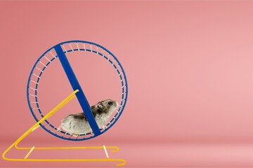 Hamster running in circle on wooden table Wall mural