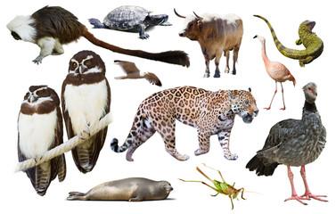 Fauna of South America set