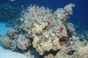 Korallenblock auf einer Sandbank