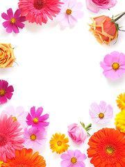 Gerbera, roses and cosmos flowers isolated on white background, top view, flat lay.