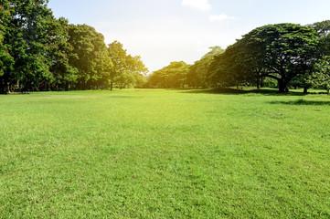 Green park. Nature view of green grass in garden. ecology concept.