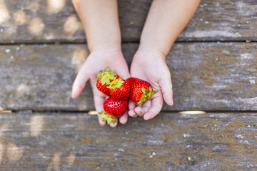 Kind hält frische Erdbeeren in Hand. Child holding fresh strawberries in hand.