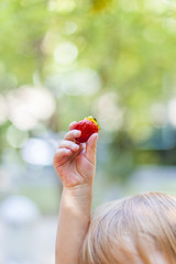 Child holding fresh strawberry in hand. Kind hält frische Erdbeere in Hand.