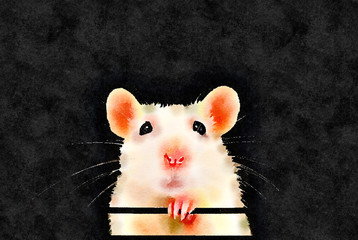 Watercolor painting of cute white pet rat portrait with black background. Front on symmetrical view of face with paw under chin. Rattus norvegicus domestica.