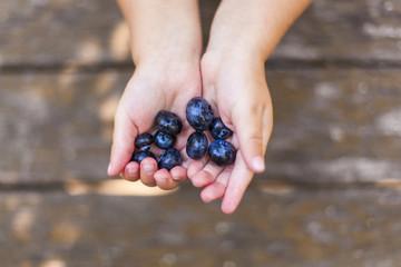 Child holding fresh blueberries in hand. Kind hält frische Heidelbeeren Blaubeeren in Hand.
