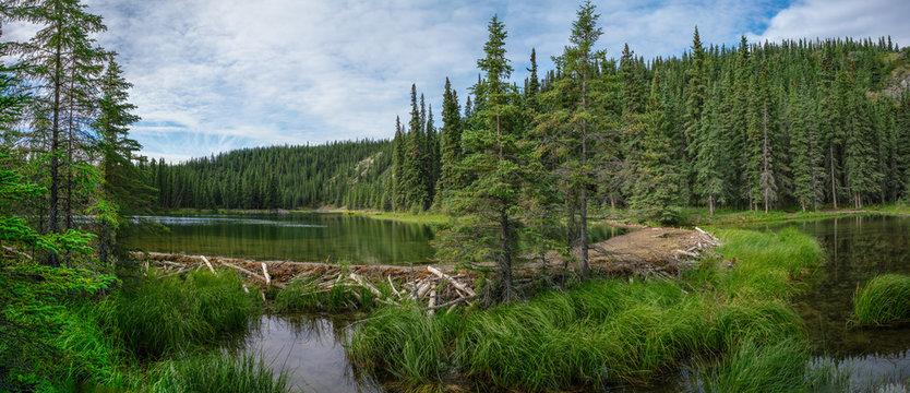 Beaver dam in Horseshoe lake in Denali national park