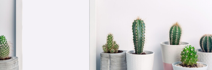 Panoramic photo of a white frame mockup with cactuses in concrete pots on an empty white background