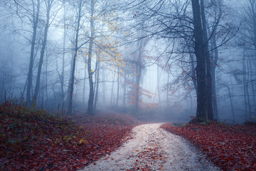 Wall Mural - Magic foggy light in colorful autumn forest with road.