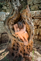 Nude young woman curled up in an old olive tree trunk, surrounded with rock wall with her head bent, hugging the knees. Concept olive oil skin care, pearl in the shell, core