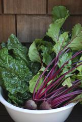 Garden Harvest Vegetables