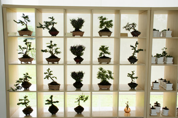 DIY small garden and little tree and Bonsai