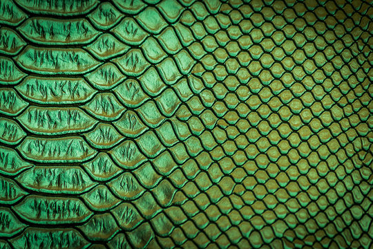 close up of snake skin texture
